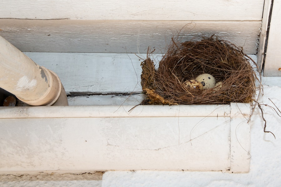 How To Bird Proof Your Roof