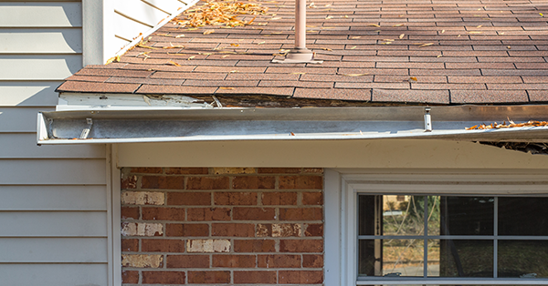 What Damages Can Birds Cause To Your Roof